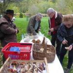 - 24 octobre 2020 - Journée des champignons